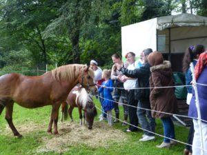 Die Pferde der Reittherapie stoßen bei den Besuchern auf großes Interesse.